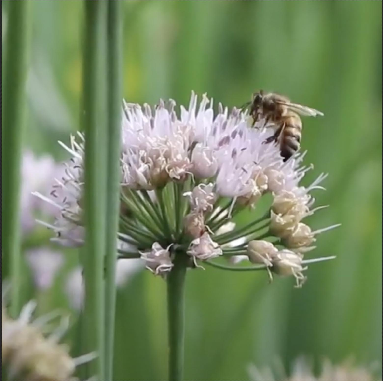 Ever Wonder Where Honey Comes From?