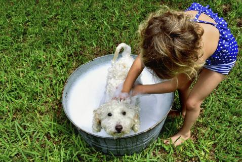 child giving dog a bath