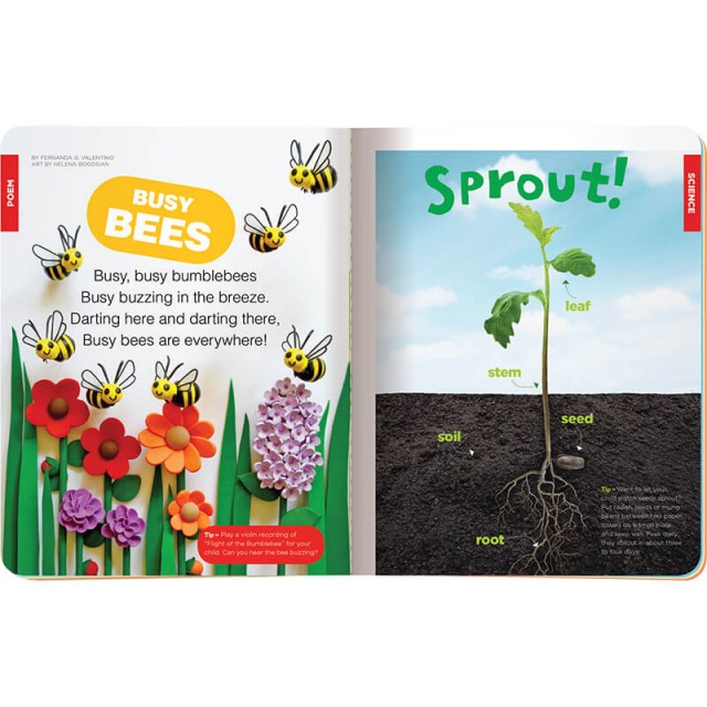 A poem about bees and how a seed sprouts